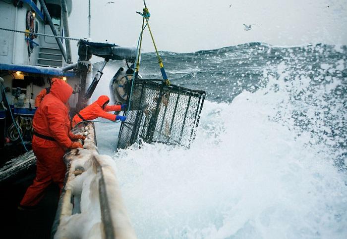 mùa săn cua hoàng đế thường diễn ra vào tháng 10 - thời điểm các vùng biển phía Bắc trở nên cực kỳ lạnh và hung dữ, vì thế việc đánh bắt càng trở nên nguy hiểm hơn.