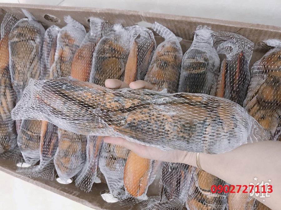 Đóng thùng Tôm hùm đông lạnh cho khách tại Hải Sản Hoàng Long