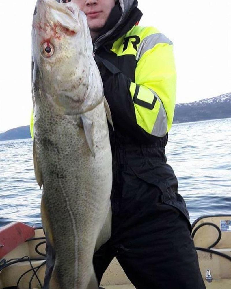 Cá tuyết Canada sống tại các vùng biển lạnh và sâu