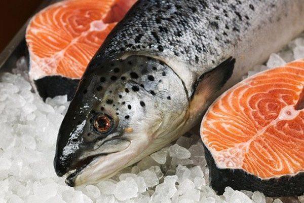 Cá hồi Nauy rất giàu dinh dưỡng được biết đến như một loại thực phẩm lành mạnh giàu protein,axit béo,omega -3 và vitamin D.